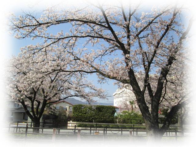 お花見2.jpg
