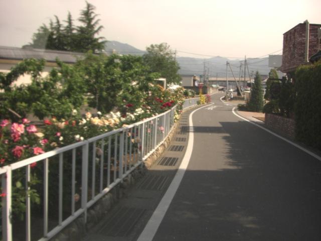 バラの小路.JPG