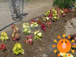 花々加工.png